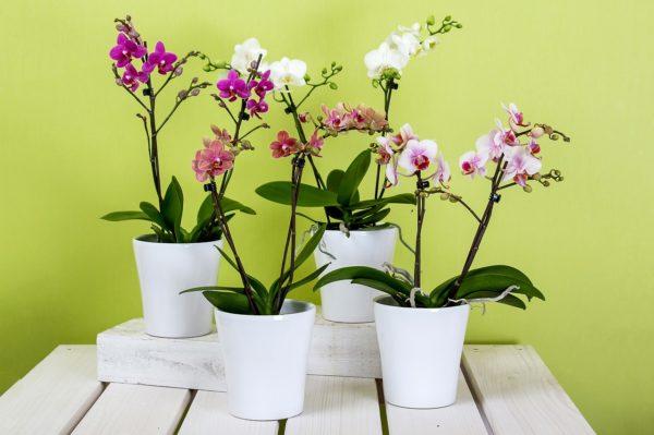 6 idées de plantes naturelles pour décoration intérieure